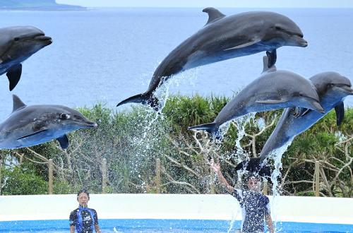 海洋博公園「オキちゃん劇場」。賢いイルカ達が豪快な技を披露するよ