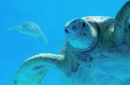 海洋博公園「ウミガメ館」。子供のテンションが上がる無料スポット