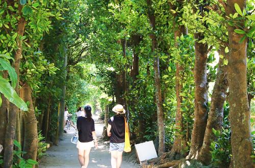 「備瀬フクギ並木通り」は緑のパワースポット。水牛車観光も楽しい!