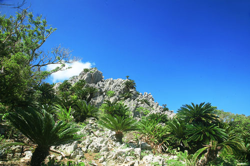 「大石林山」キャンプのできるスピリチュアル山。石パワーを取りこめ