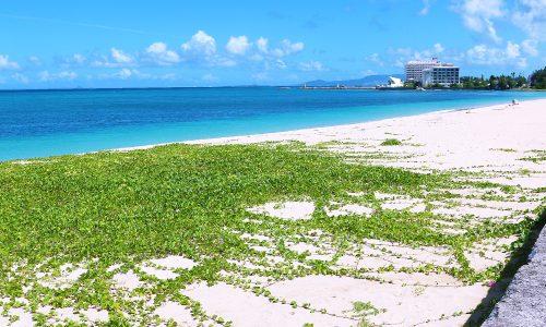 「冨着ビーチ」海水浴も楽しめる天然の海。お子様は貝殻広い♪